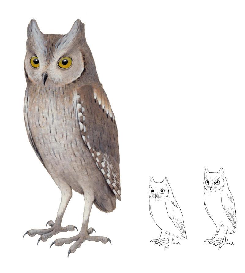 Una investigación del IMEDEA (CSIC-UIB) descubre una especie extinta ...